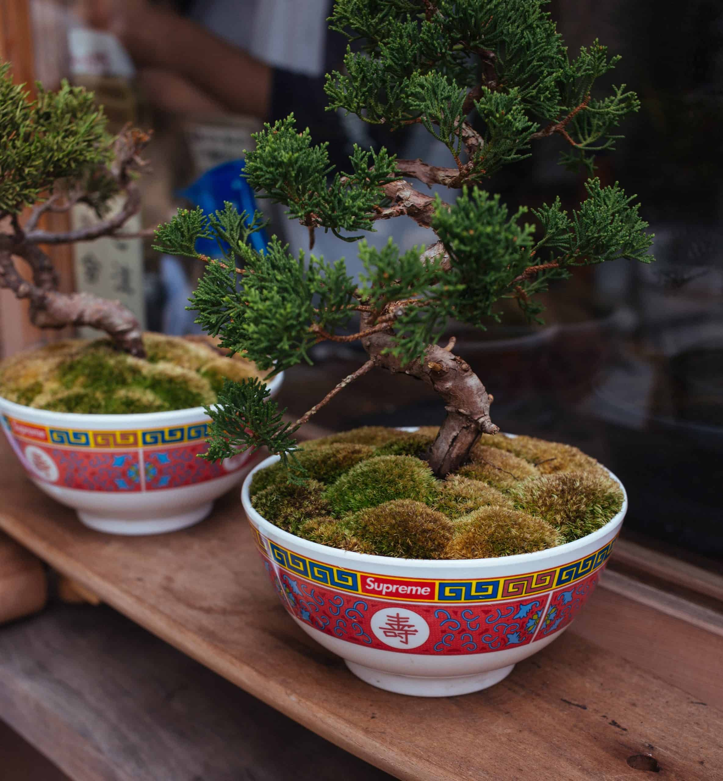 Artificial Bonsai Trees For Home Decoration